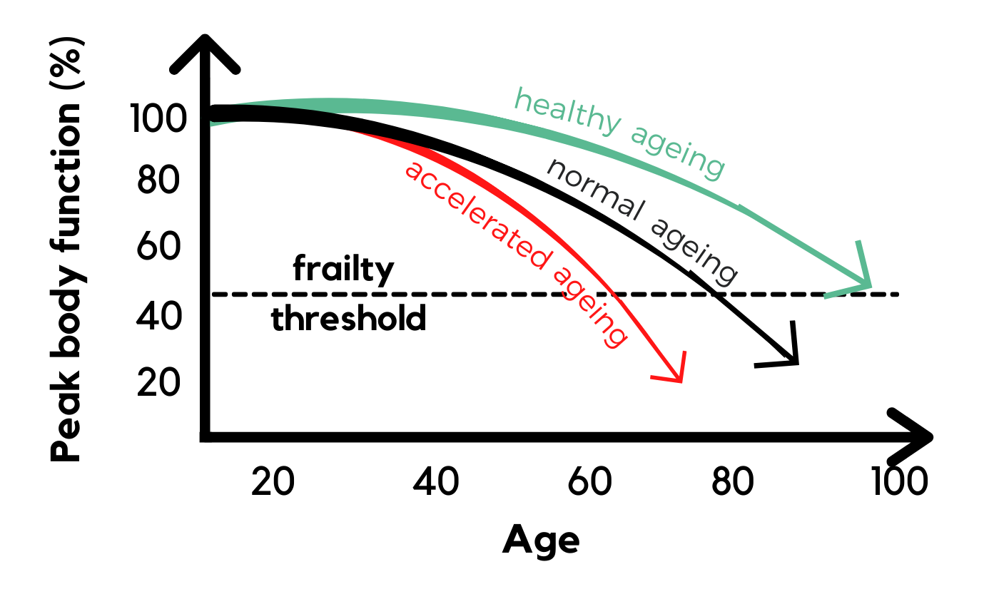 Graph Depicting Patterns of Ageing | Ageing & Frailty Threshold | Vee Uye
